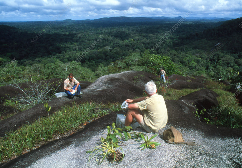 Botanists collecting plant specimens in Guyana
