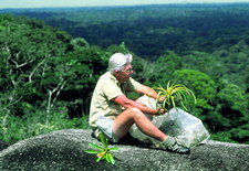 Botanist collecting plant specimens in Guyana