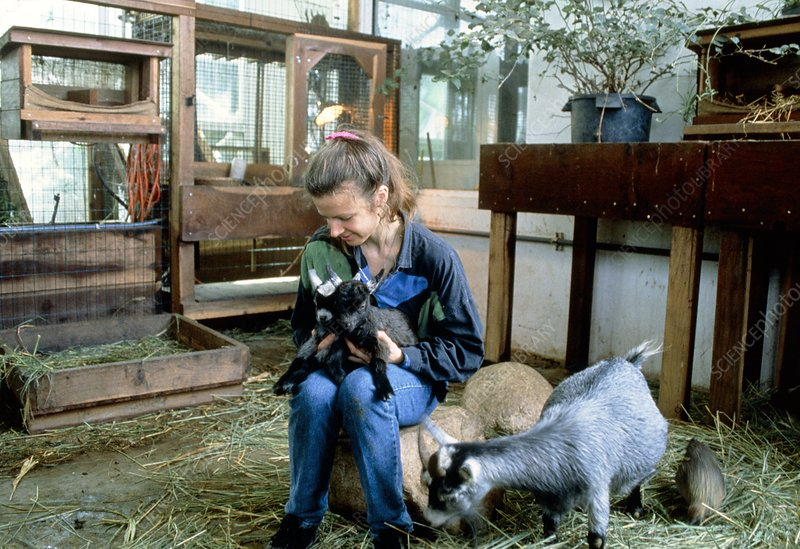 Jayne Poynter with goats in Biosphere 2