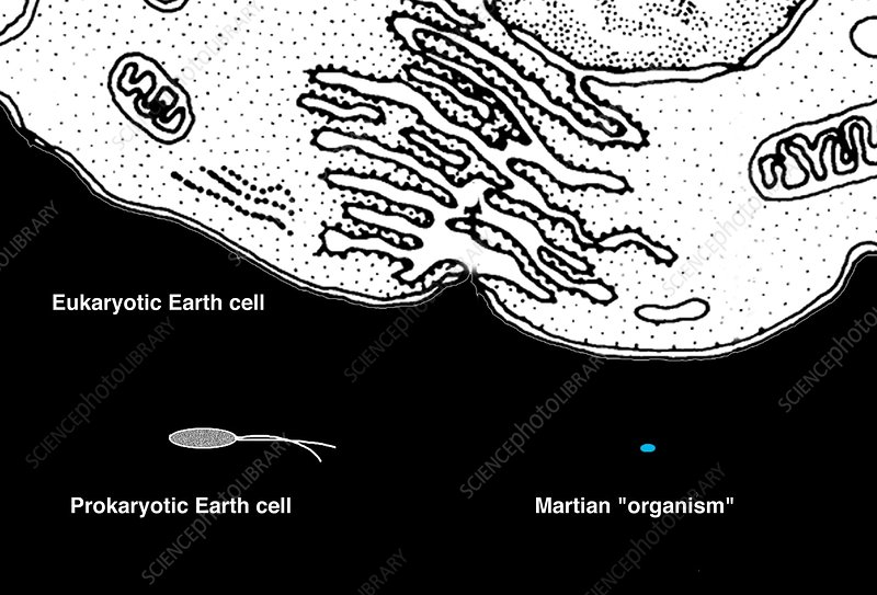 Microbial life from Mars and Earth