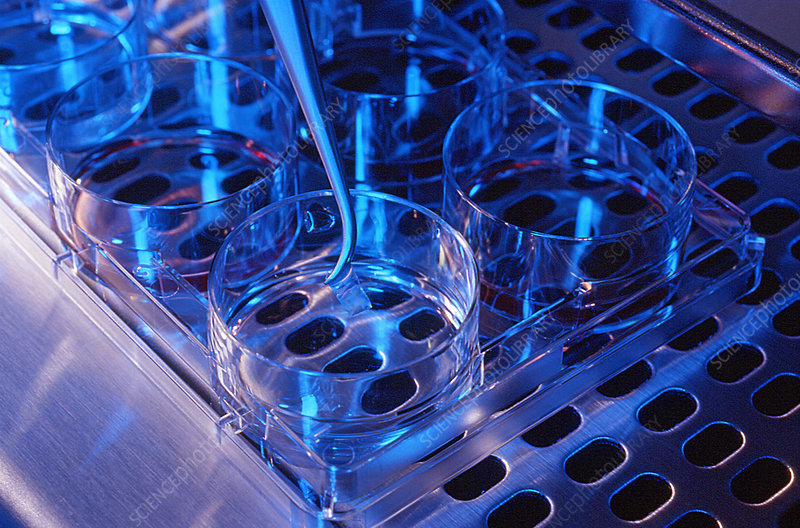 Stem cell research, biopolymers