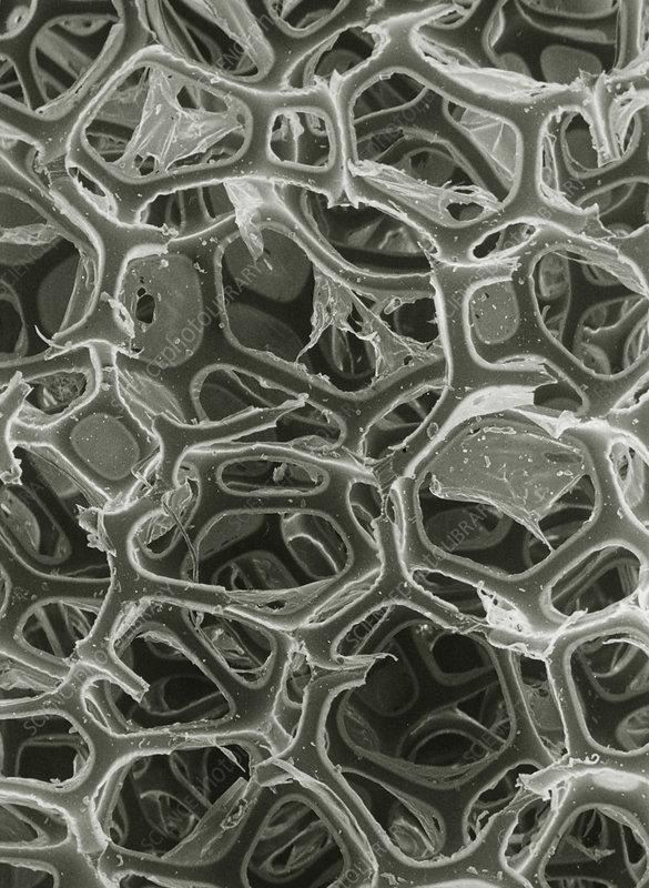 SEM of open-cell polyurethane plastic foam