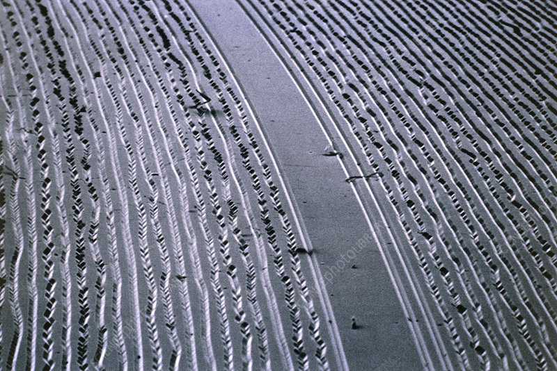 SEM of grooves in LP record