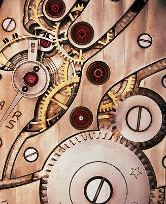 Internal cogs and gears of a 17-jewel Swiss watch