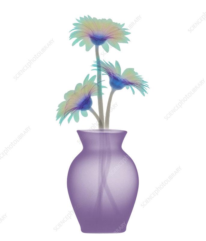 Vase Arrangements Pictures | Flowers in Vases | Flower Shop Network