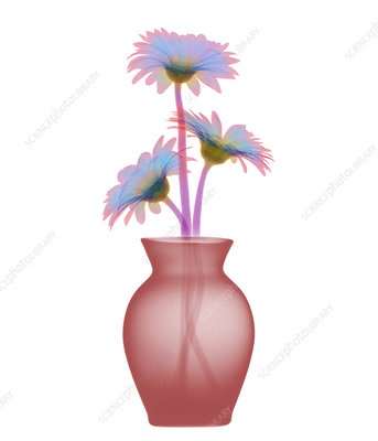 Vase & flowers X-ray
