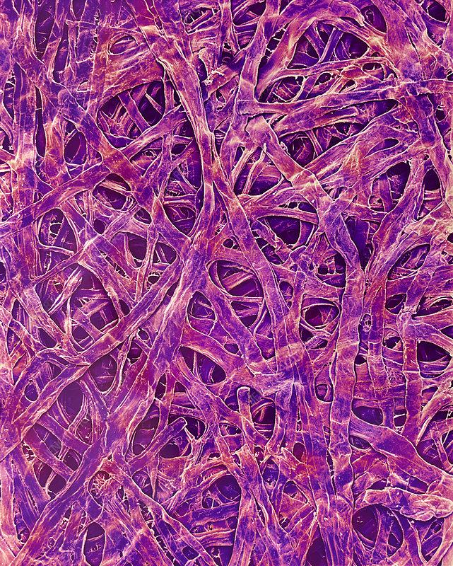 Seaweed Paper Fibres Sem Stock Image H100 0654 Science