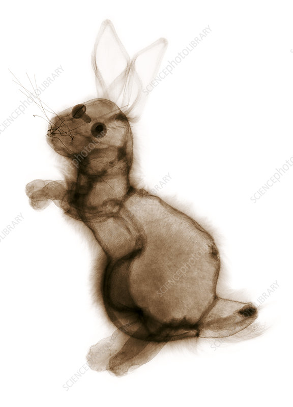 Toy rabbit, X-ray