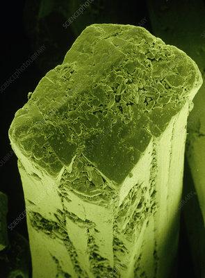 F/col SEM of crystal of monosodium glutamate