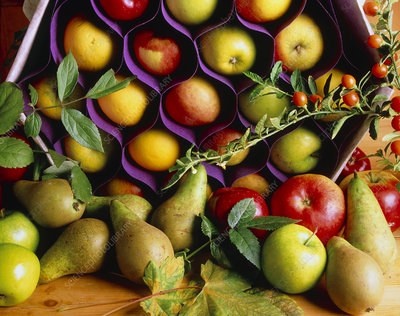 Apples and pears.