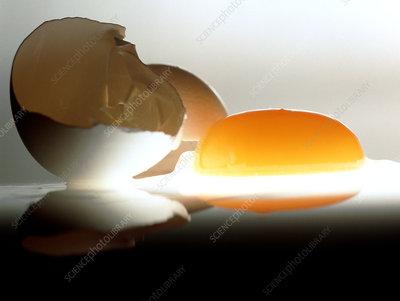 Eggyolk & broken shell