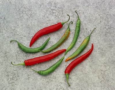 A selection of green and red hot chilli's