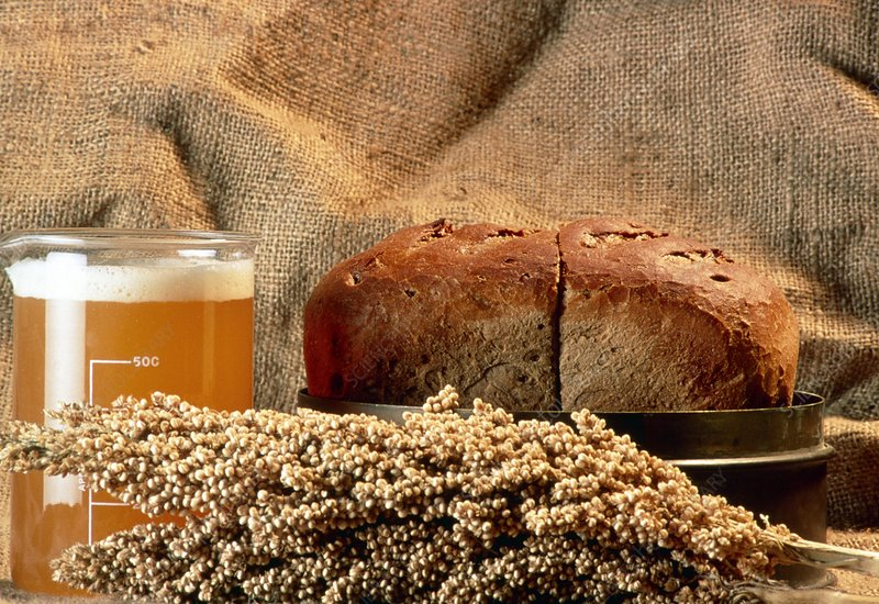 Still life with sweet sorghum, beer and bread