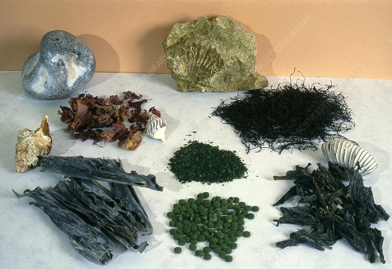 Selection of edible algae, and Chlorella pills