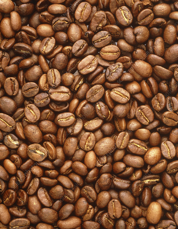 A collection of coffee beans