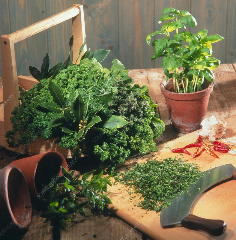 Fresh herbs with chopping board and mezzaluna