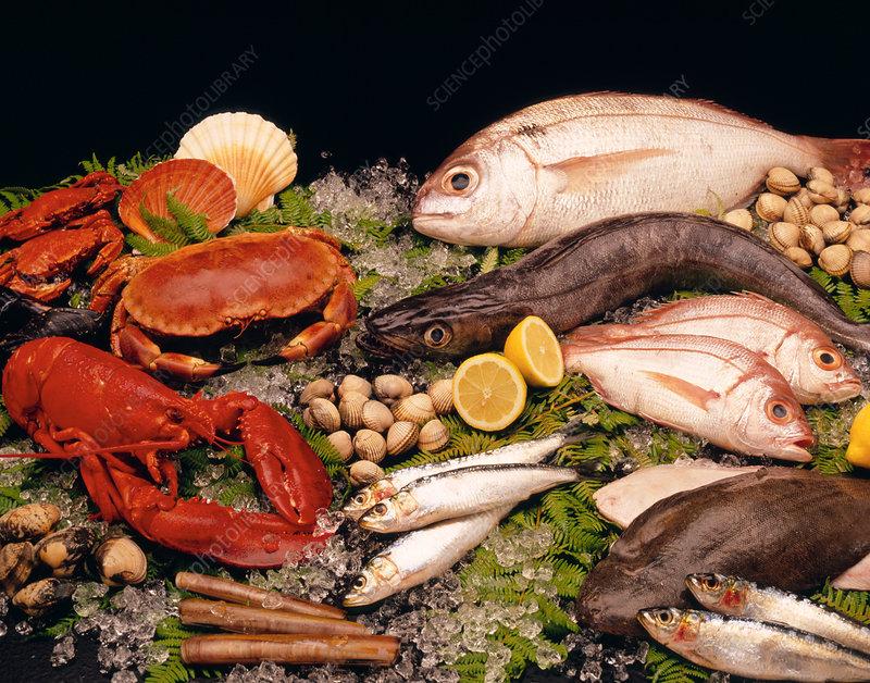 Assortment of edible fresh fish and shellfish