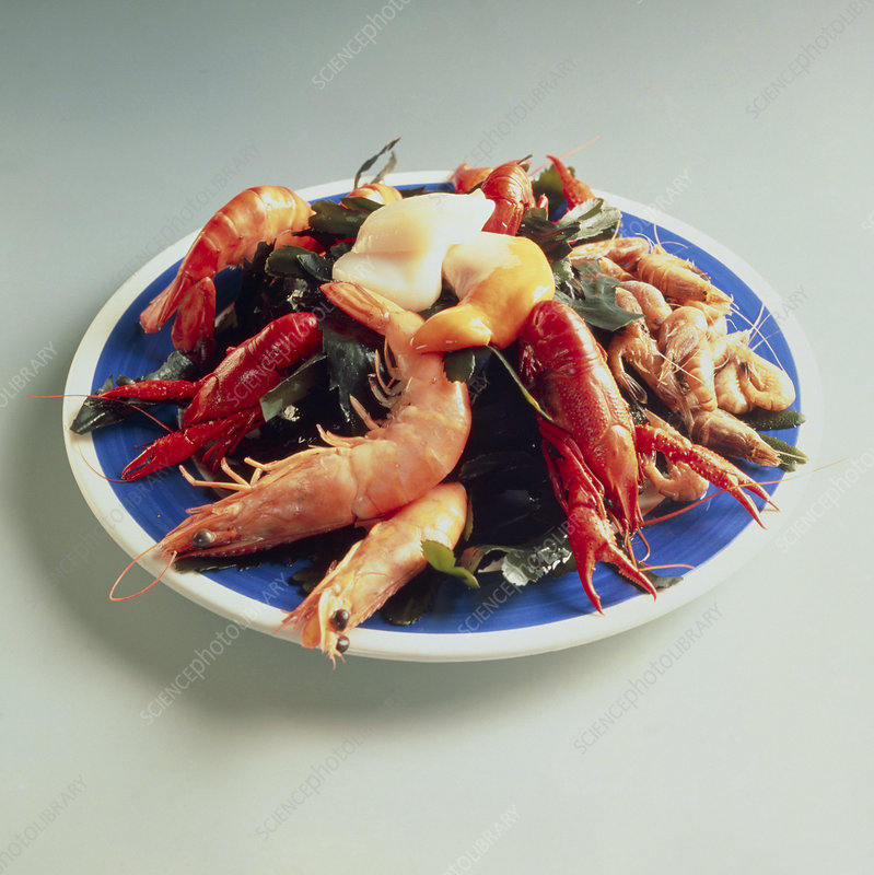 Plate of shellfish: prawn and lobster assortment