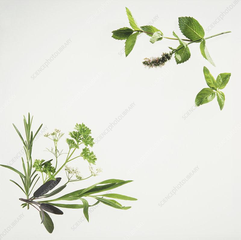 Fresh herb arrangement