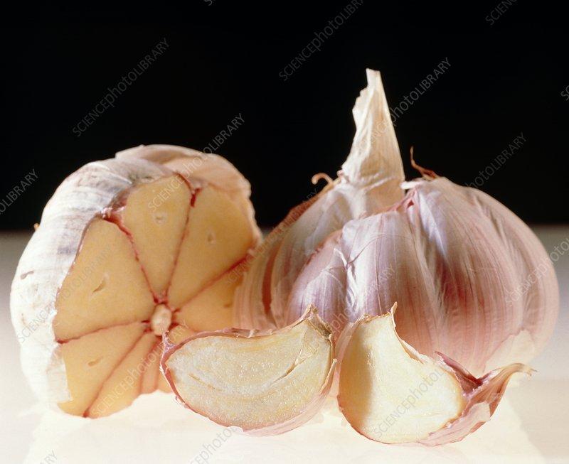 Bulbs and cloves of garlic