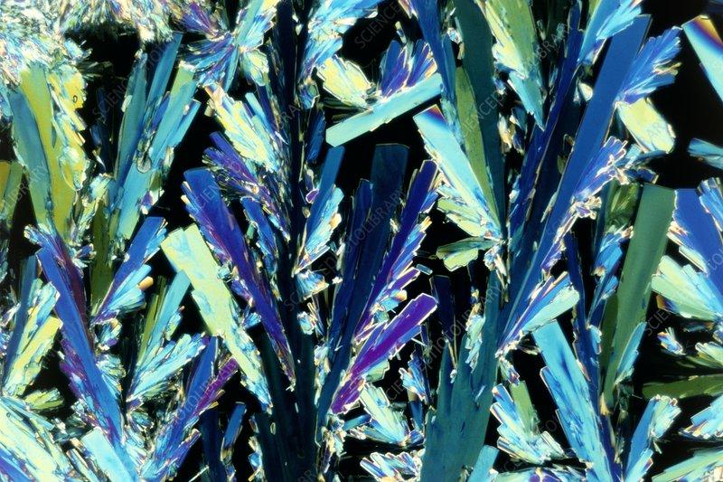 PLM of crystals of glucose sugar