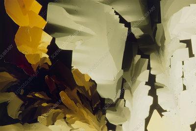 PLM of crystals of sucrose sugar