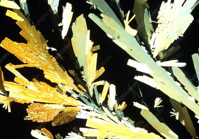 Polarised light micrograph of glucose crystals