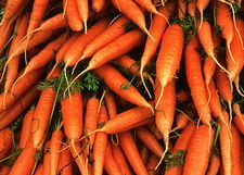 Pile of organically-grown carrots