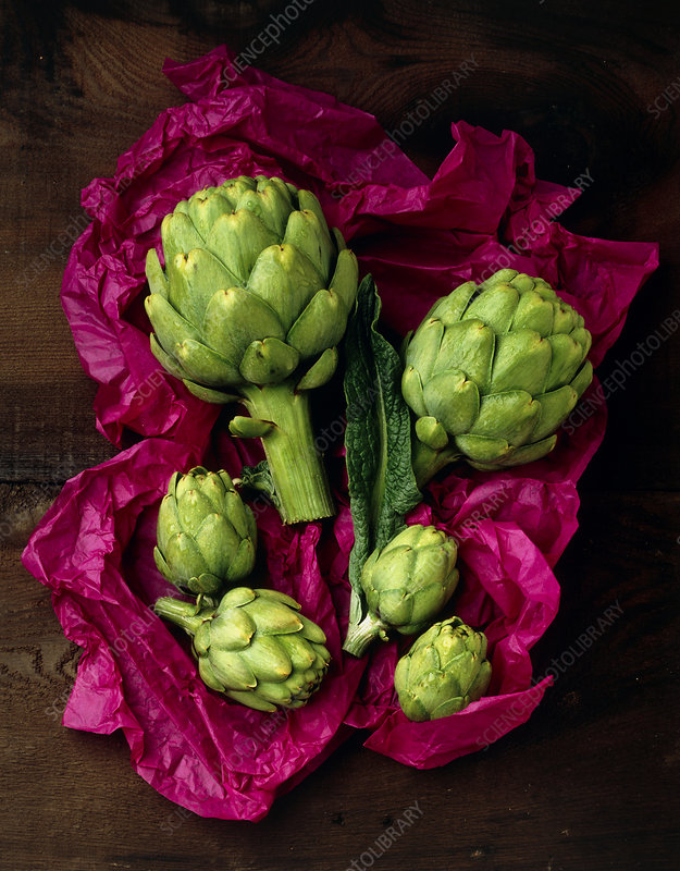Artichoke, Cynara scolymus, hearts and leaves