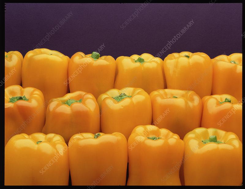 Yellow bell peppers, Capscium annuum