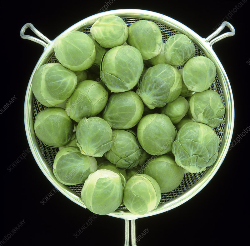 Metal sieve of Brussels sprouts