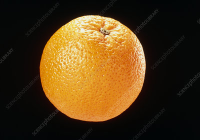 View of an orange, Citrus sinensis