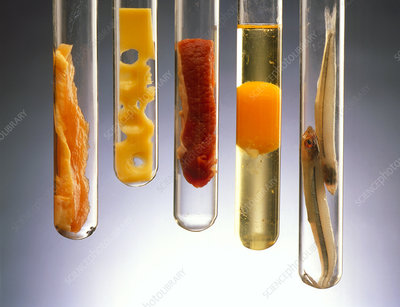 Fat-rich foods presented in test tubes