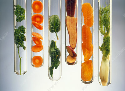 Nutrient-rich foods presented in test tubes