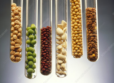 Selection of pulses presented in test tubes