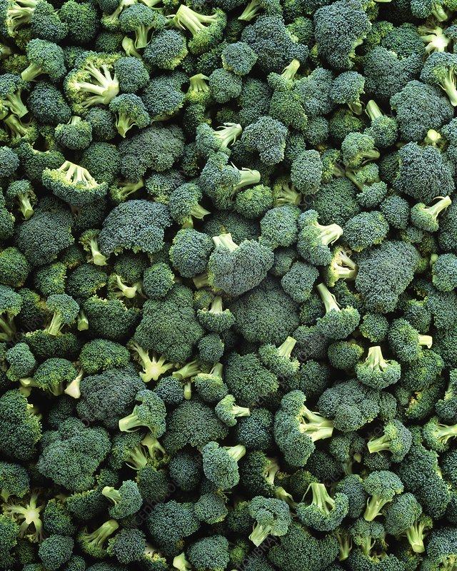 Broccoli florets, Brassica oleracea italica