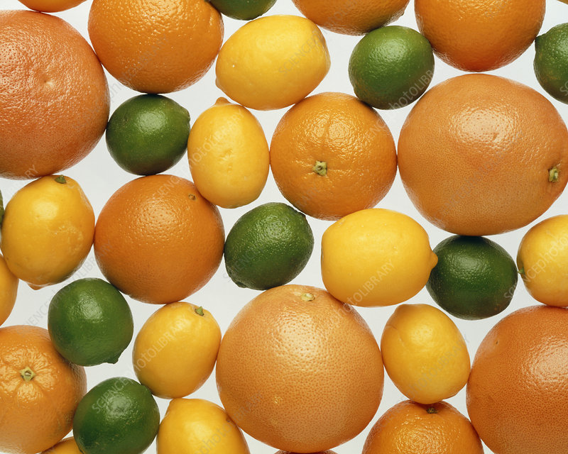 Orange, lemon, lime and grapefruit citrus fruits