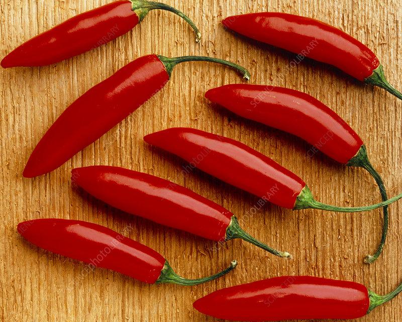 View of hot red Serrano peppers, Capsicum annuum