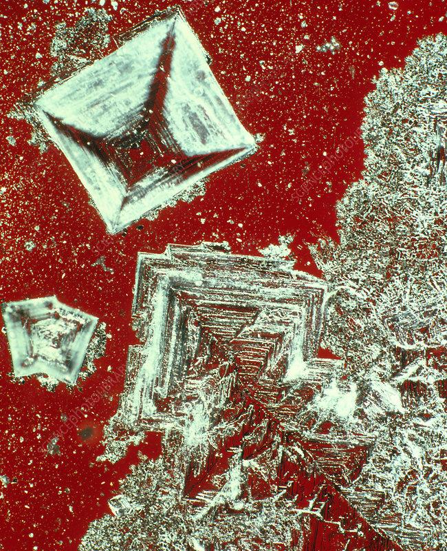 Polarised light micrograph of salt crystals