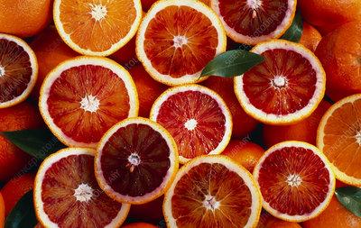 Several halved blood oranges (Citrus sinensis)