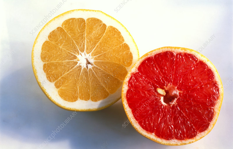 Pink and white grapefruit (Citrus paradisi) halves