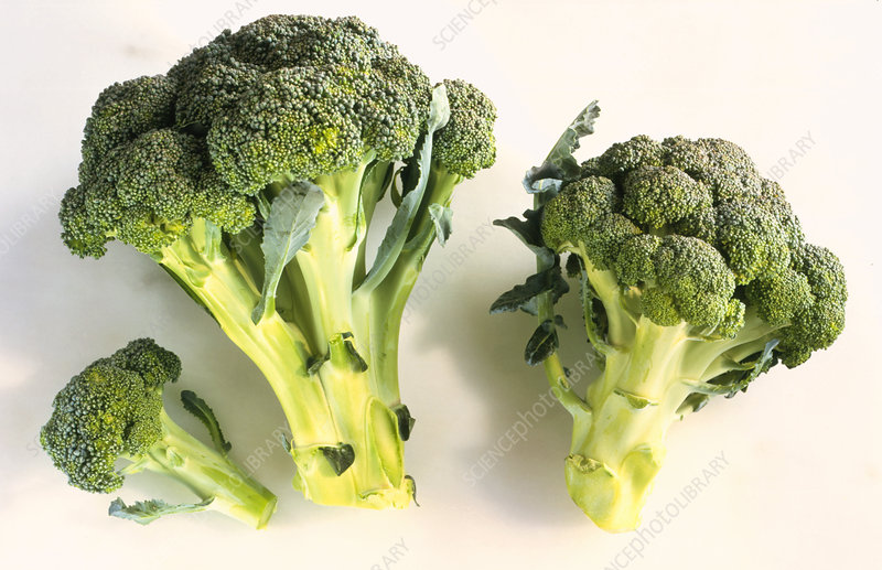 Florets of broccoli (Brassica oleracea italica)