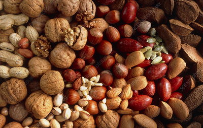 View of an assortment of nuts