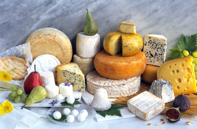View of an assortment of cheeses