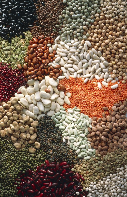 View of an assortment of pulses and beans
