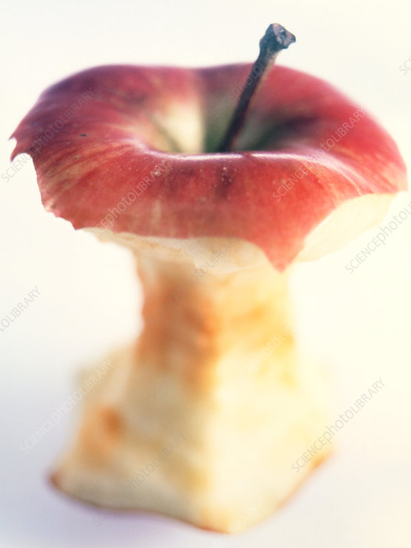 View of an apple core (Malus sp.)