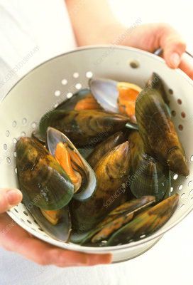 Green lip mussels
