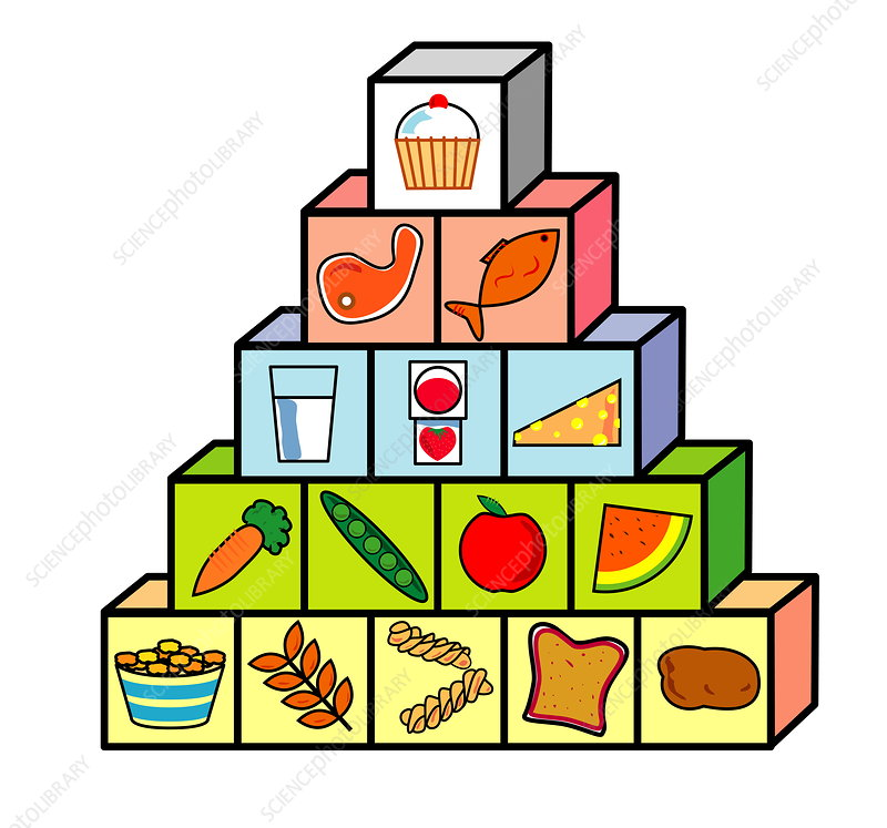 ... science photo library caption food pyramid computer artwork of a food