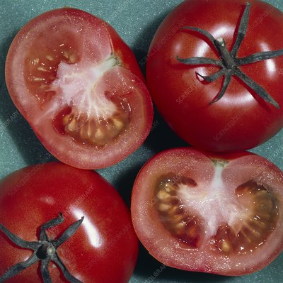 Tomatoes cut open