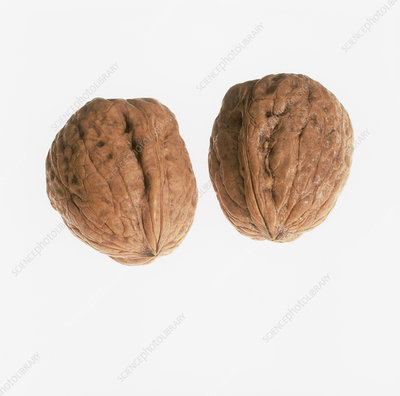 Pair of walnuts